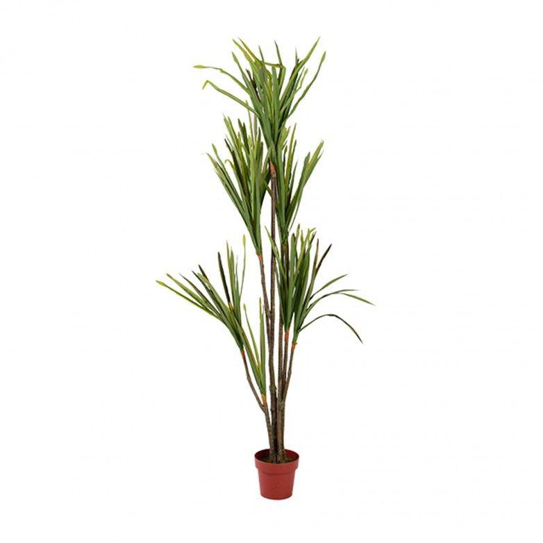 YUCCA PLANT II