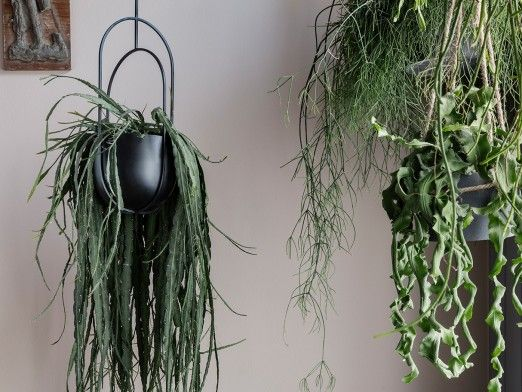 7 tips to change your home with artificial plants