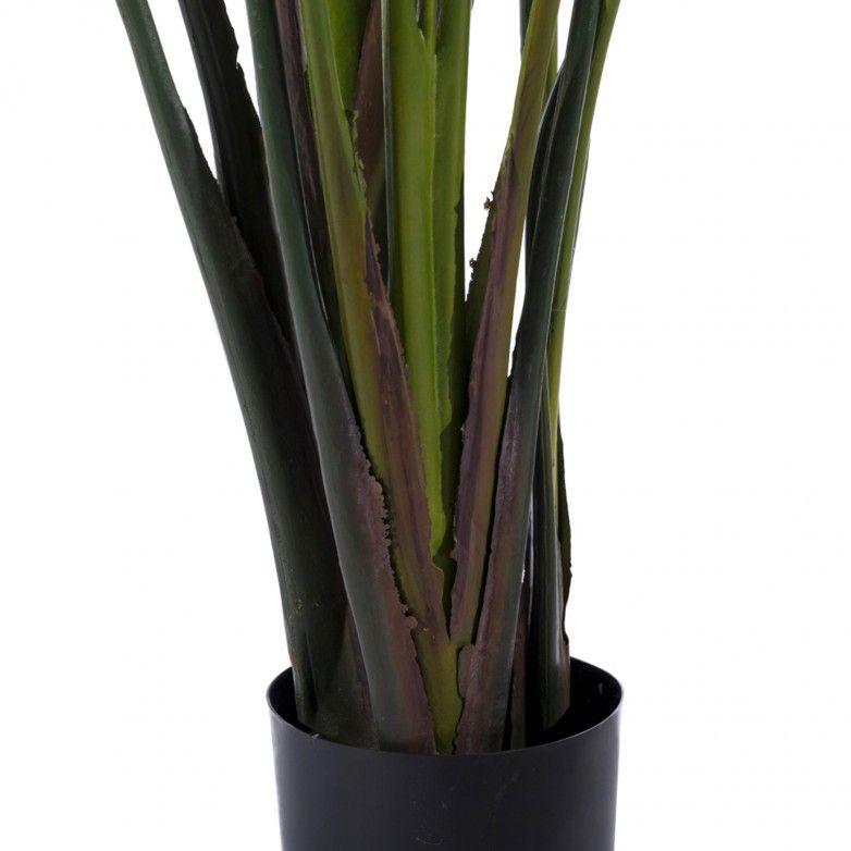 JUNGLE PLANT