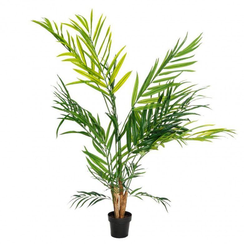 BAMBU PLANT