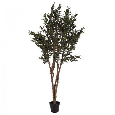 OLIVO PLANT